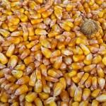 Buenas noches guisantes, maíz y arroz BIO 200 g