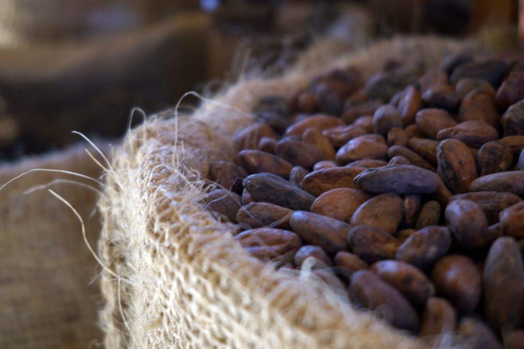 Semillas de cacao