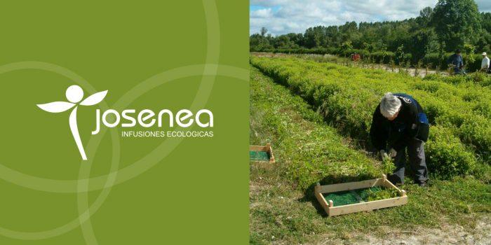 Entrevista a Ignacio Santos, de JOSENEA, infusiones ecológicas